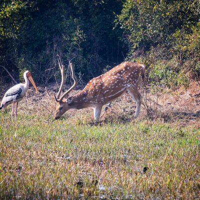 Bharatpur Package From Udaipur