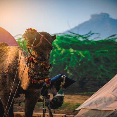 Ajmer Pushkar Trip Package From Jaipur