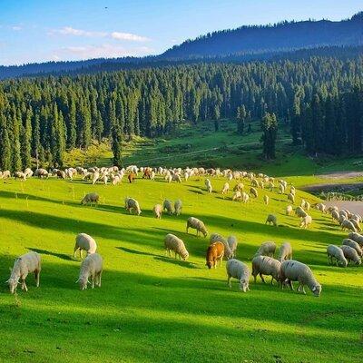 Fascinating Kashmir Package From Srinagar