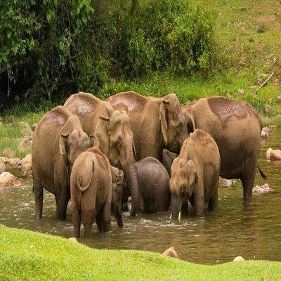 Magical Kerala Trip Package